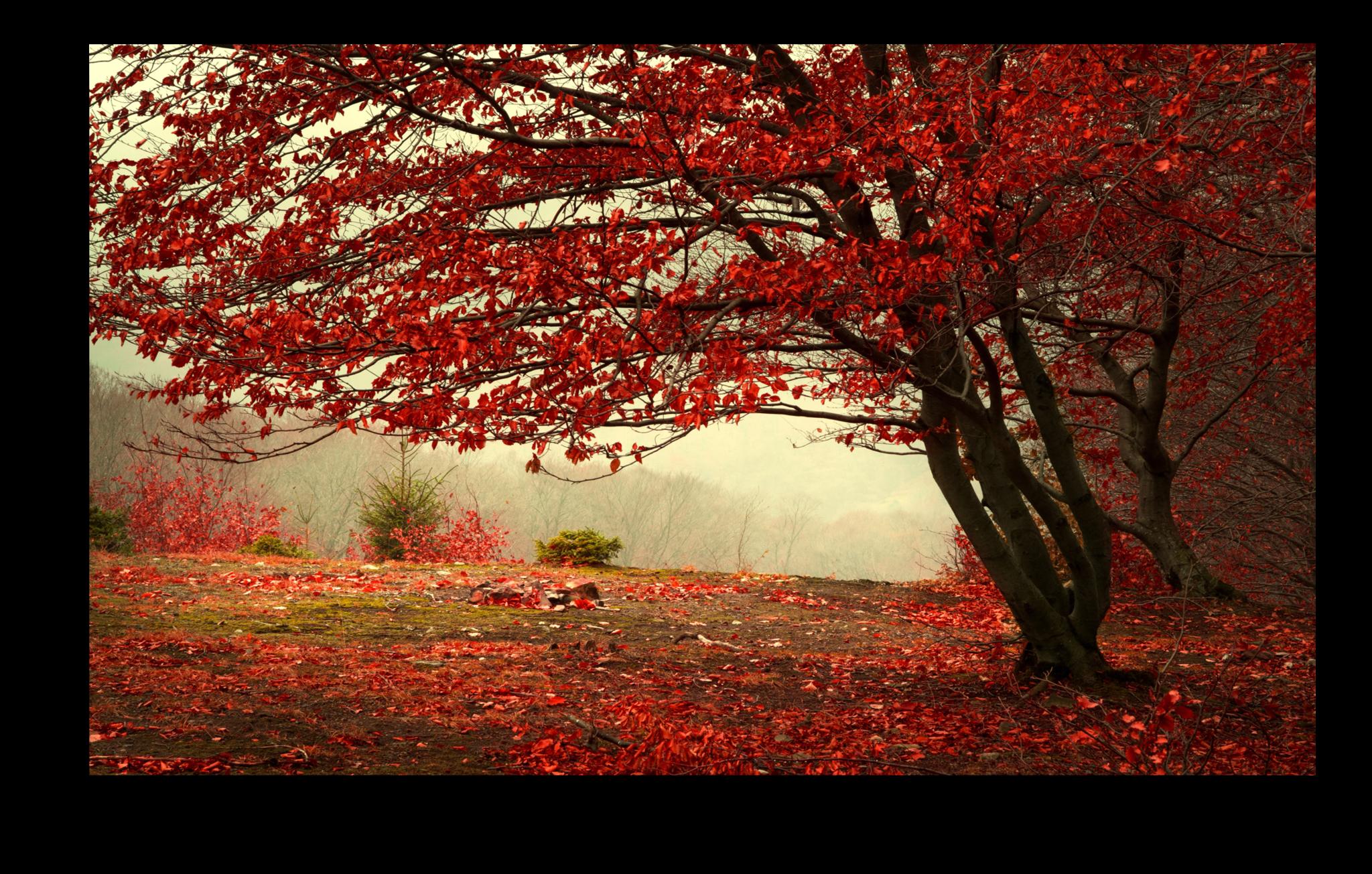 """Природа Постер """"Красный листопад"""" п5.png"""
