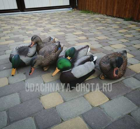 Чучела кряквы Avian-X Fusion Pack Mallards