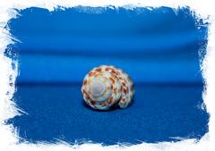 Канцилла гранатина (Cancilla granatina)