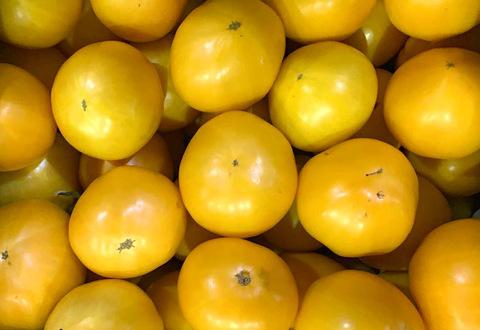 Помидоры Сезонные Жёлтые, 1 кг