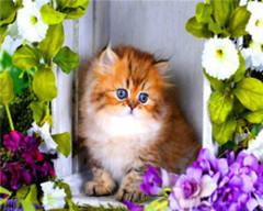 Картина раскраска по номерам 40x50 Рыжий котенок в рамке из цветов