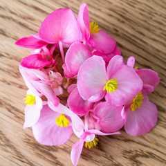 Бегония (цветы) / 20 шт