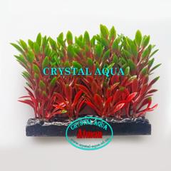 Растение Атман H-044A, 10см