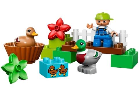 LEGO Duplo: Уточки в лесу 10581 — Forest: Ducks — Лего Дупло