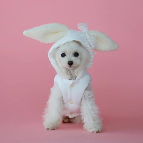 2191 BH - Курточка для собак