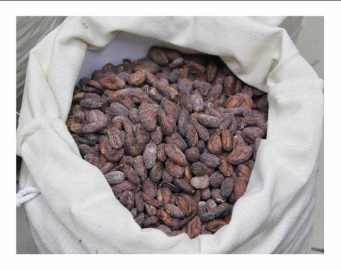Какао-бобы Vietnam Good Fermented Main Crop