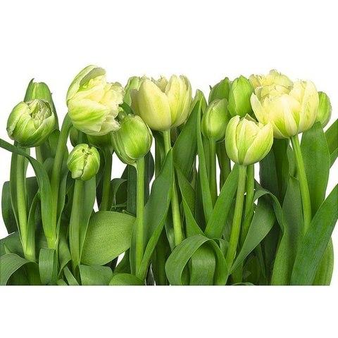 Тюльпаны 368x254 см