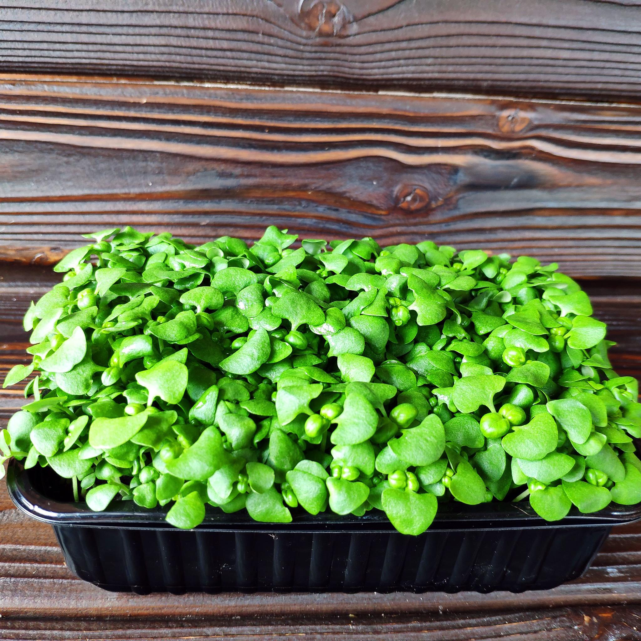 Фотография Базилик зеленый на корне (лоток) / 20 гр /РАСПРОДАЖА купить в магазине Афлора