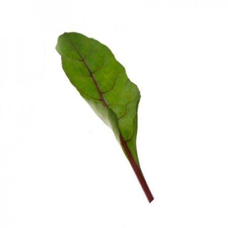 Мангольд Чарли F1 семена мангольда (Rijk Zwaan / Райк Цваан) ЧАРЛИ_F1_3_семена_овощей_оптом.jpg