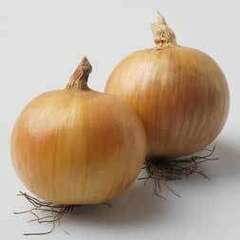 Вольф F1 семена лука репчатого (Hazera / Хазера)