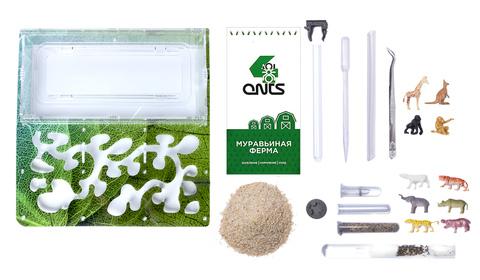 Antrum XL зеленый + колония Messor Structor