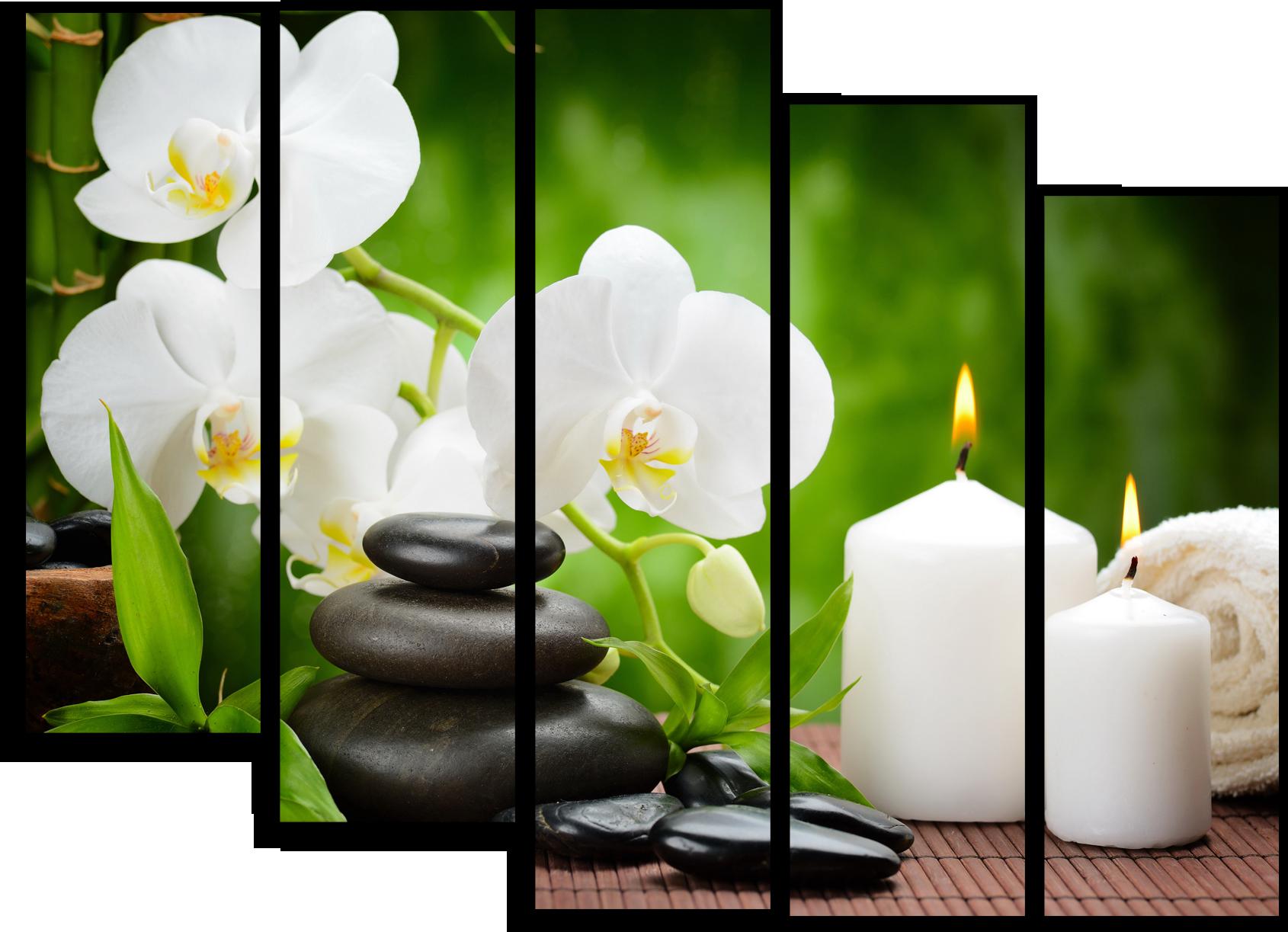 "Цветы Модульная картина ""Цветущая орхидея"" М709.png"