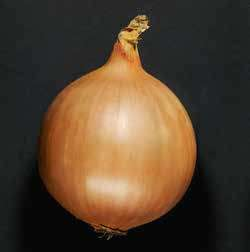Репчатый Дормо F1 семена лука репчатого (Hazera / Хазера) Дормо_F1.jpg
