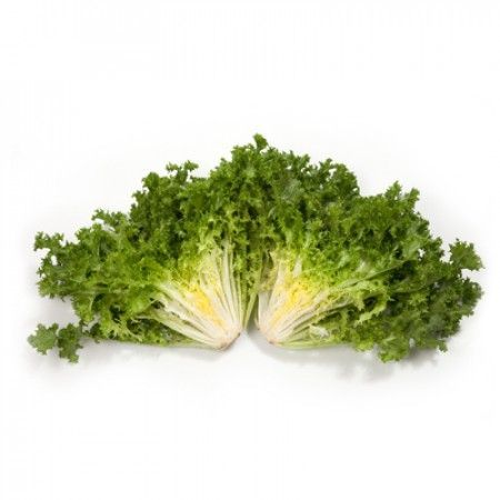 Эндивий Монако семена эндвия (Rijk Zwaan / Райк Цваан) МОНАКО_2_семена_овощей_оптом.jpg