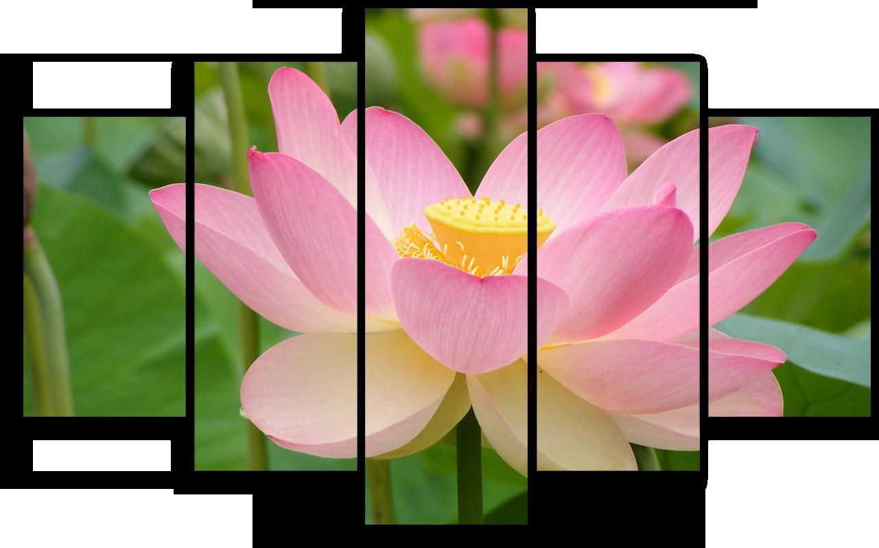 """Цветы Модульная картина """"Лотос розовый"""" М902.png"""