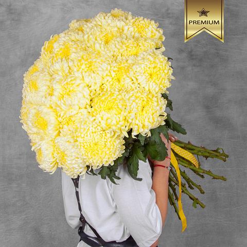 Хризантемы крупноцветковые Fred Shoesmith Cream от 3шт