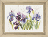 Lanarte Irisses (Ирисы)