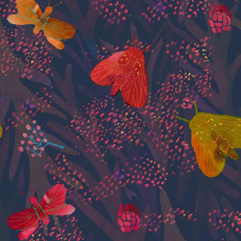 бабочки. butterfly