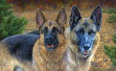 Картина раскраска по номерам 40x50 Две овчарки