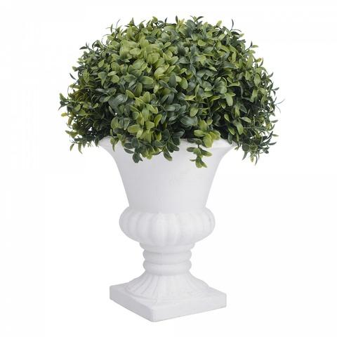 Растение в большом  белом кашпо