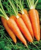 Морковь 1 кг. (урожай 2020 г.) от Ирины Верхотуровой