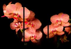 """Модульная картина """"Ночные цветы"""""""