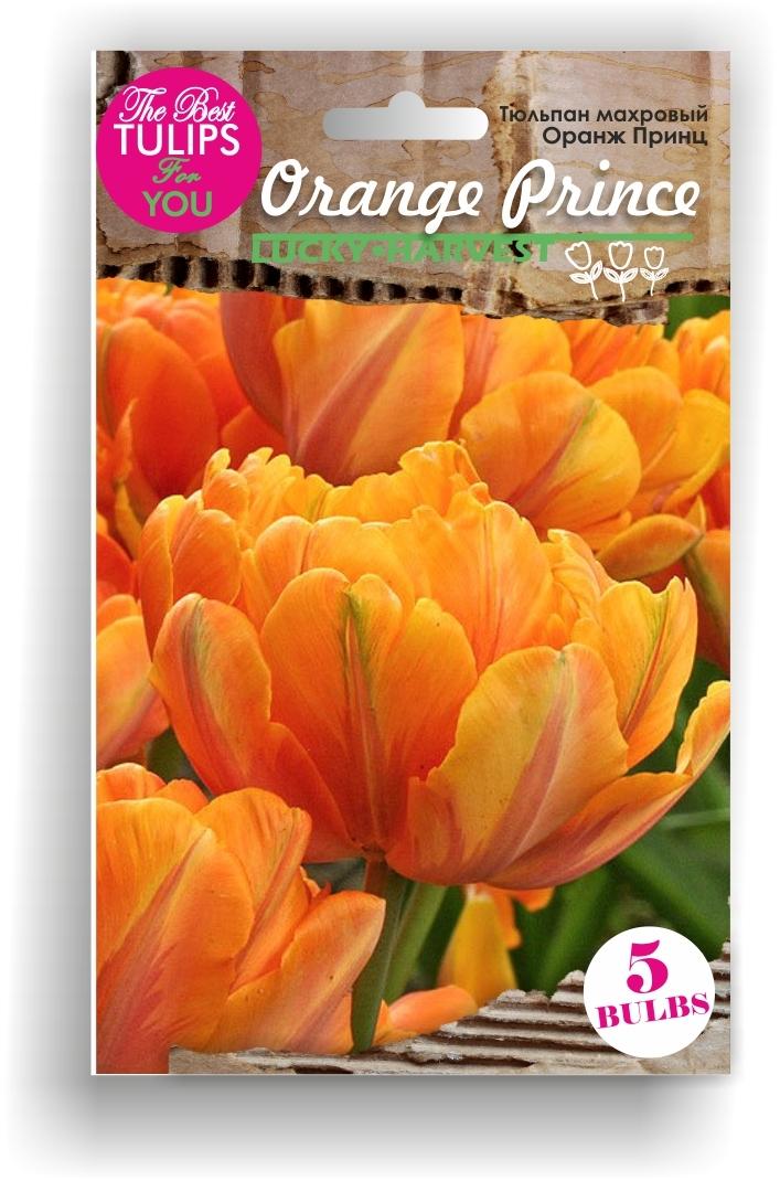 Тюльпан Махровый поздний Orange Prince (Оранж Принц) Украина 5 шт