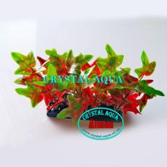 Растение Атман H-148A, 10см