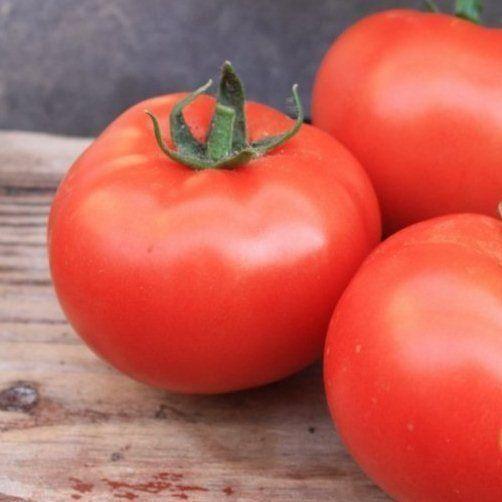 Красный Монсан F1 семена томата полудетерминантного (Enza Zaden / Энза Заден) Монсан_F1.jpeg