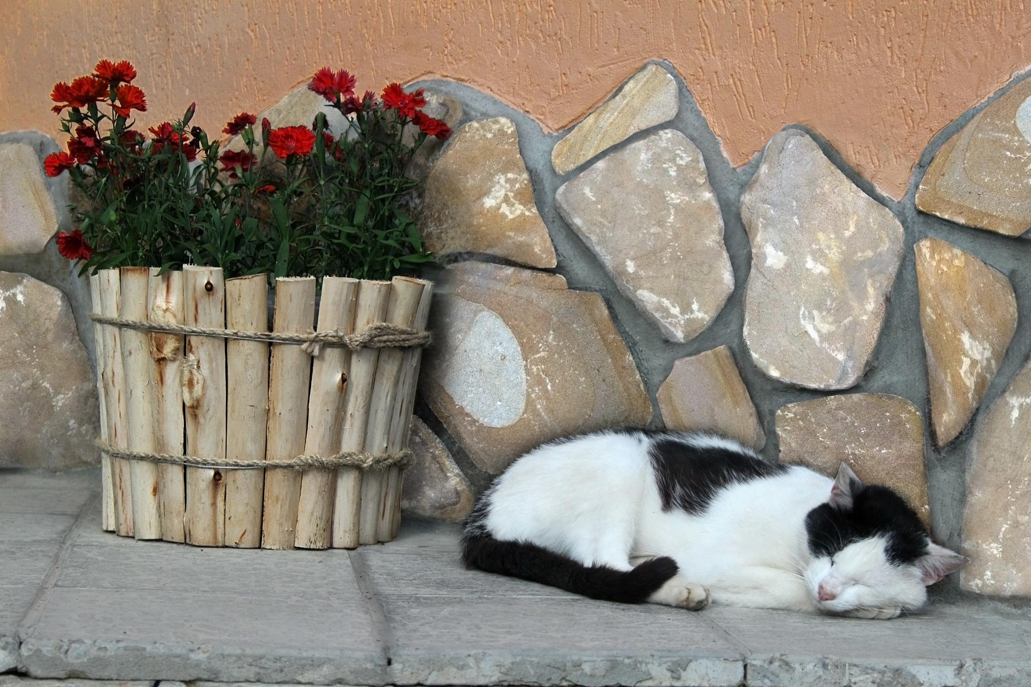 Котик Булыжник облицовочный Жёлтый