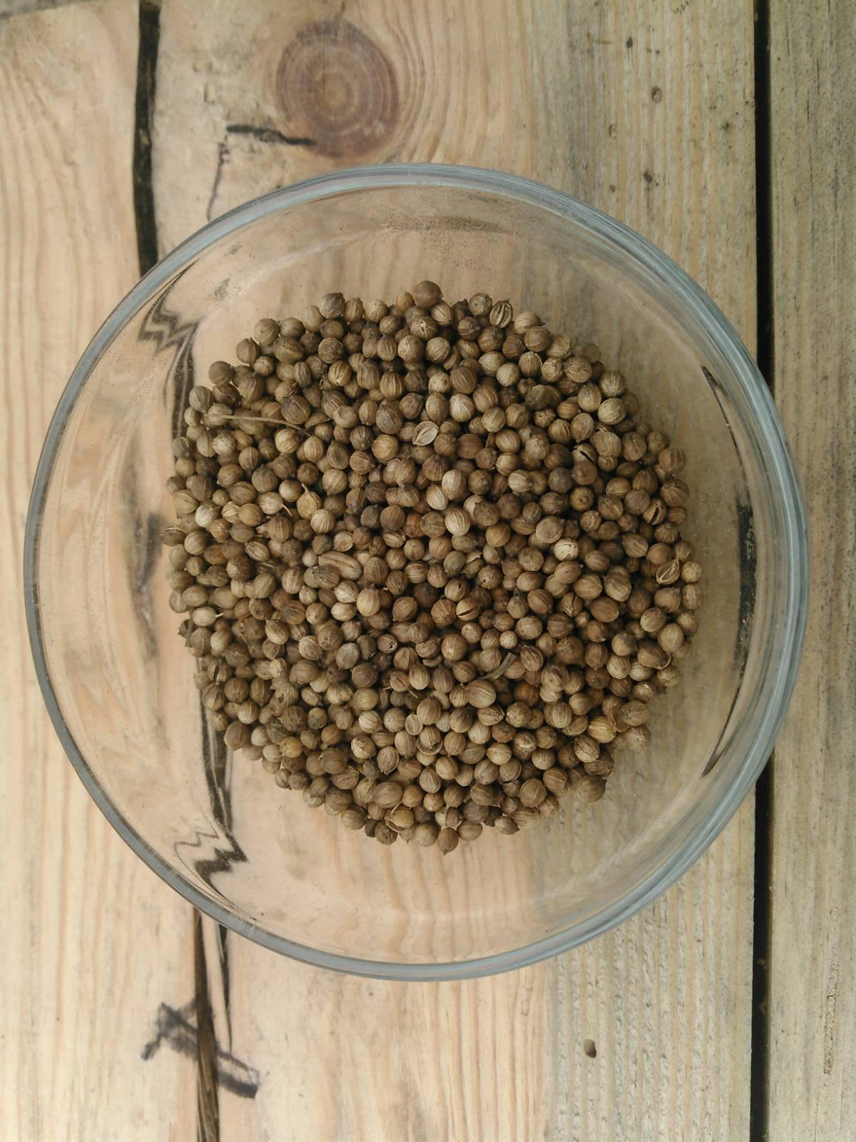Семена Микрозелени Кориандр 20 г. LUCKY HARVEST (Украина)