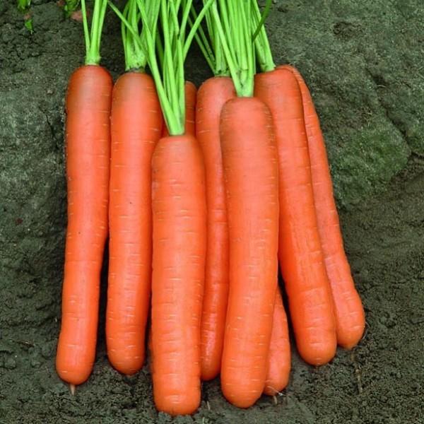 Rijk Zwaan Семена моркови Монанта, Rijk Zwaan, 0,5 гр. import-files-56-563ea268-162f-4d92-bf54-06287e0817eb-600x600.jpeg