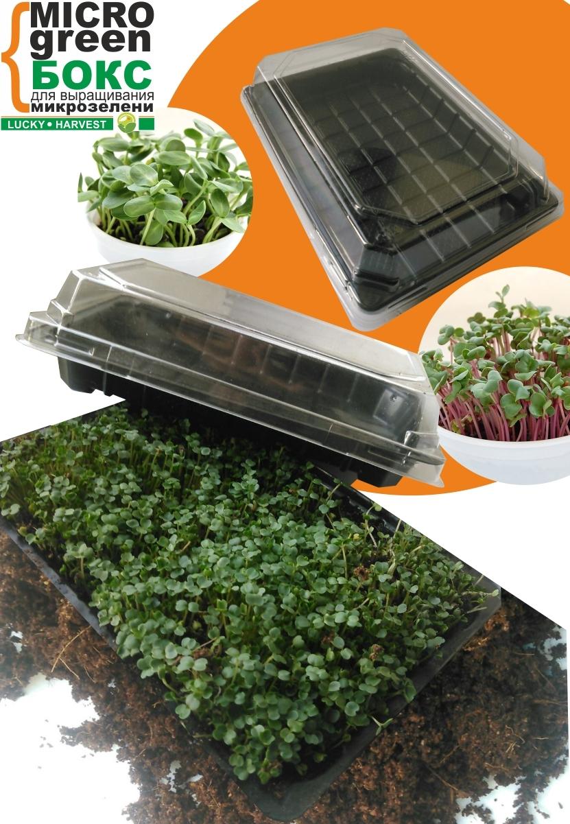 MICROGREEN BOX для выращивания микрозелени (23 см X 15 см) ТМ LUCKY HARVEST