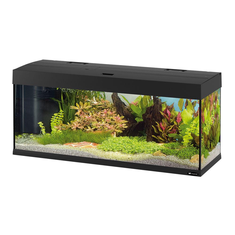 также поскорее фото узких аквариумов зависимости числа формы