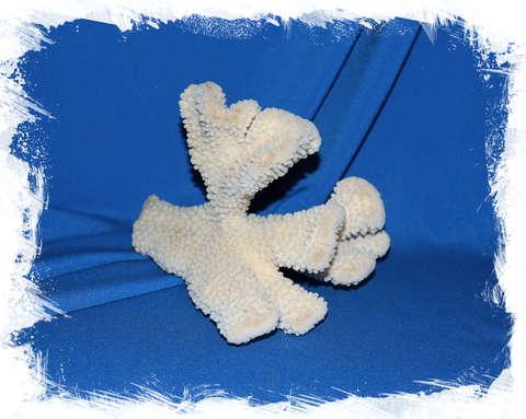 Коралл Кошачья лапа (Cat Paw Coral) бежевый