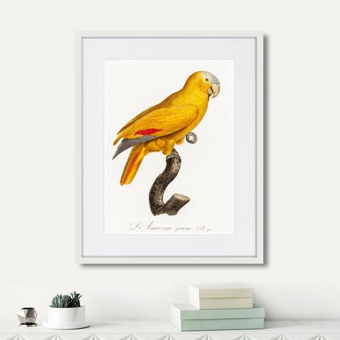Джон Гульд - Beautiful parrots №1, 1872г.