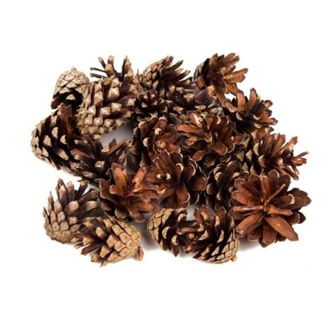 Шишки сосновые натуральные, размер: 4-5см (упаковка 20шт.)