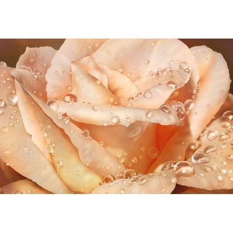 Чайная роза 268x196 см