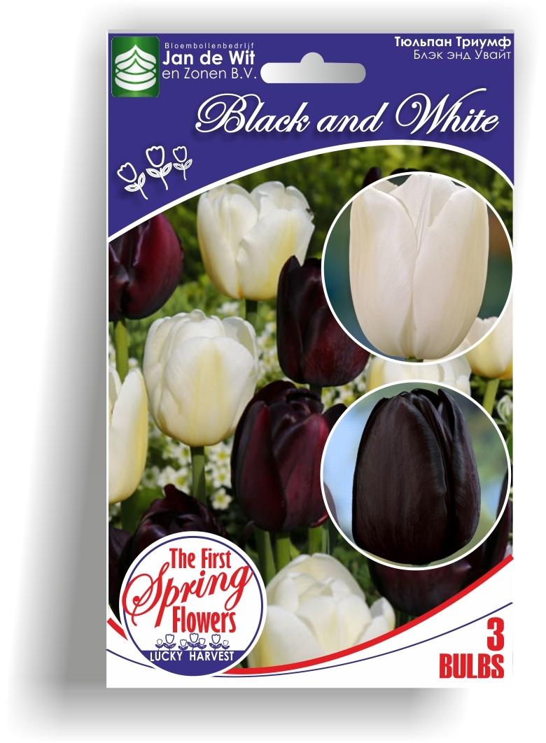 Тюльпан   Смесь    Black and White  ( Блэк энд Увайт)  Jan de Wit en Zonen B.V. Нидерланды 3 шт.