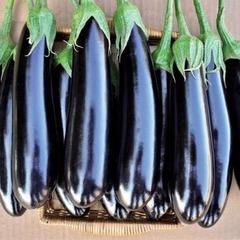 Фаворит F1 семена баклажана (Vilmorin / Вильморин)