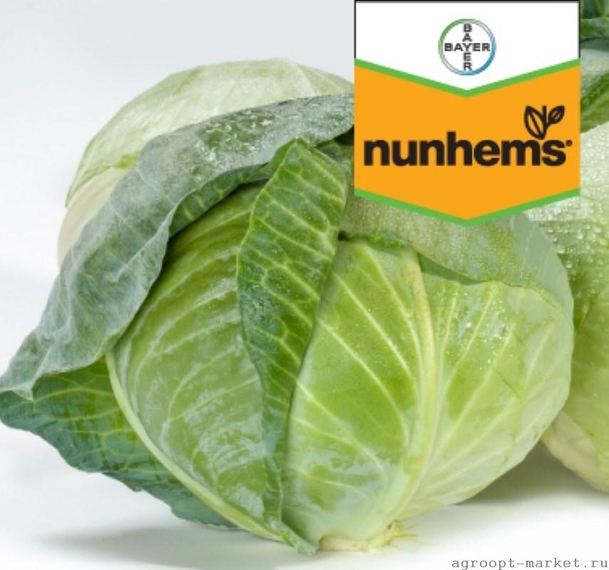 Nunhems Акварель F1 семена капусты белокочанной (Nunhems / Нюнемс) акварель.jpg