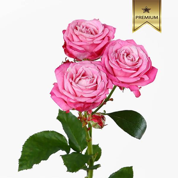 Купить необычные кустовые пионовидные яркие розовые розы в Перми доставка цветов