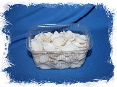 Белые ракушки для рукоделия