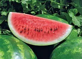 Арбуз Арашан F1 семена арбуза (Syngenta / Сингента) Арашан_F1_семена_овощей_оптом.jpg