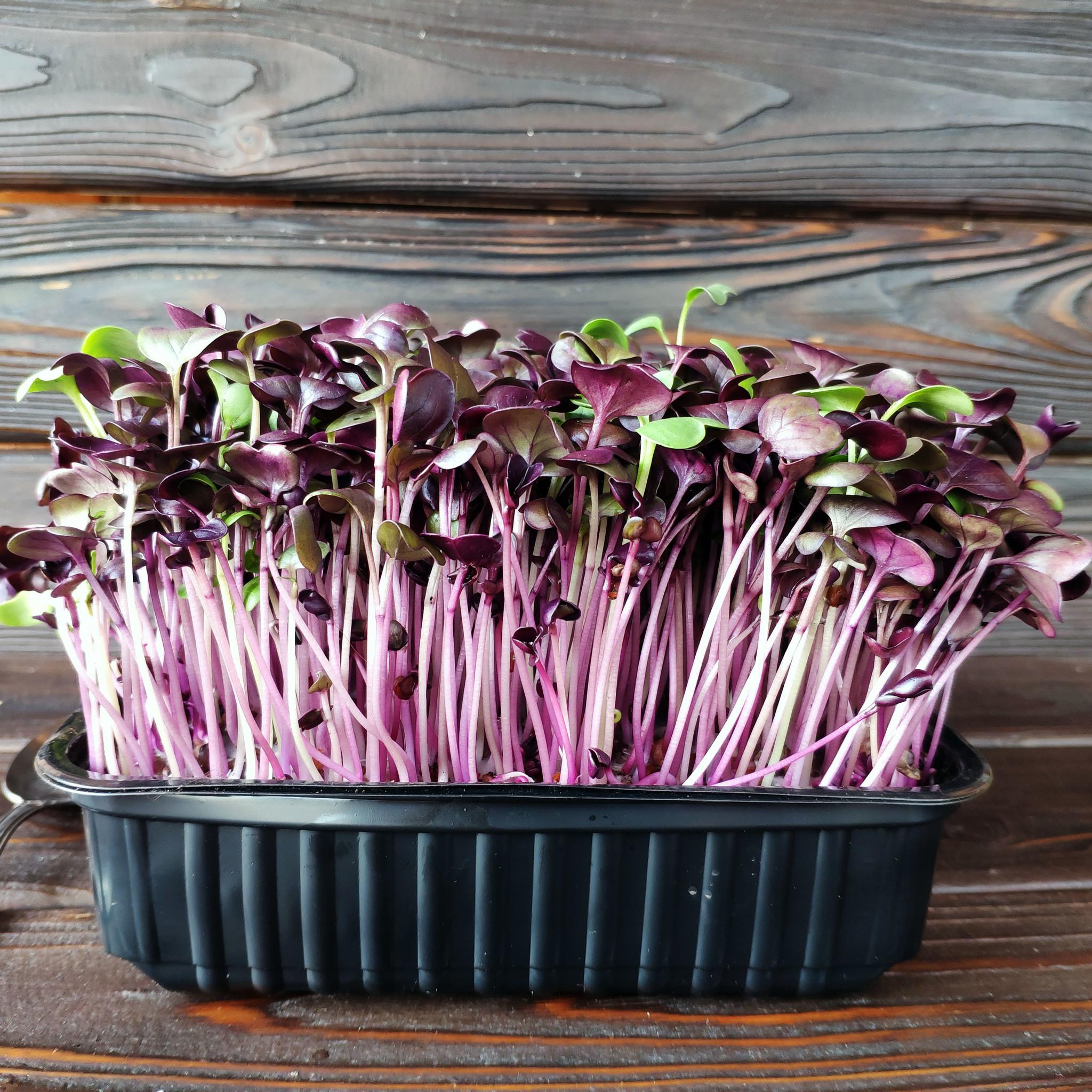Фотография Редис фиолетовый на корне (лоток) / 40 гр купить в магазине Афлора