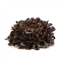 Ксем семена салата листового (Rijk Zwaan / Райк Цваан)