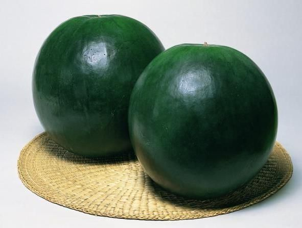 Арбуз Асван F1 семена арбуза (Sakata / Саката) Асван_F1_семена_овощей_оптом.jpg