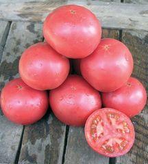 Тарпан F1 семена томата процессингового (Nunhems / Нюнемс)