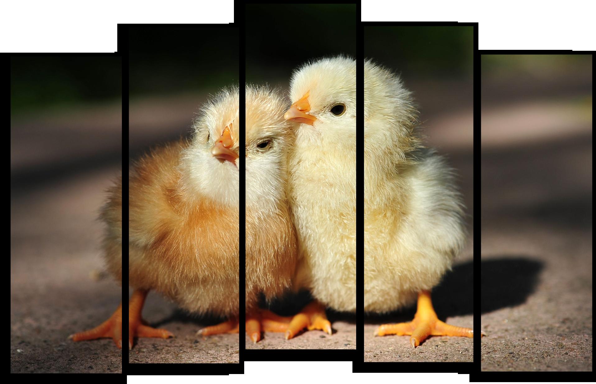 """Животные Модульная картина """"Птенчики"""" М491.png"""