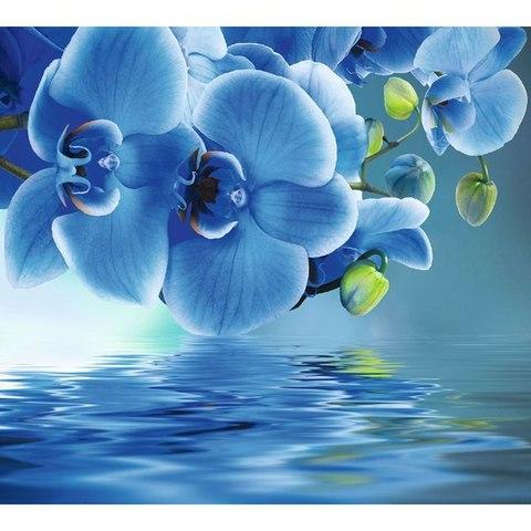 Голубая орхидея 294x260 см